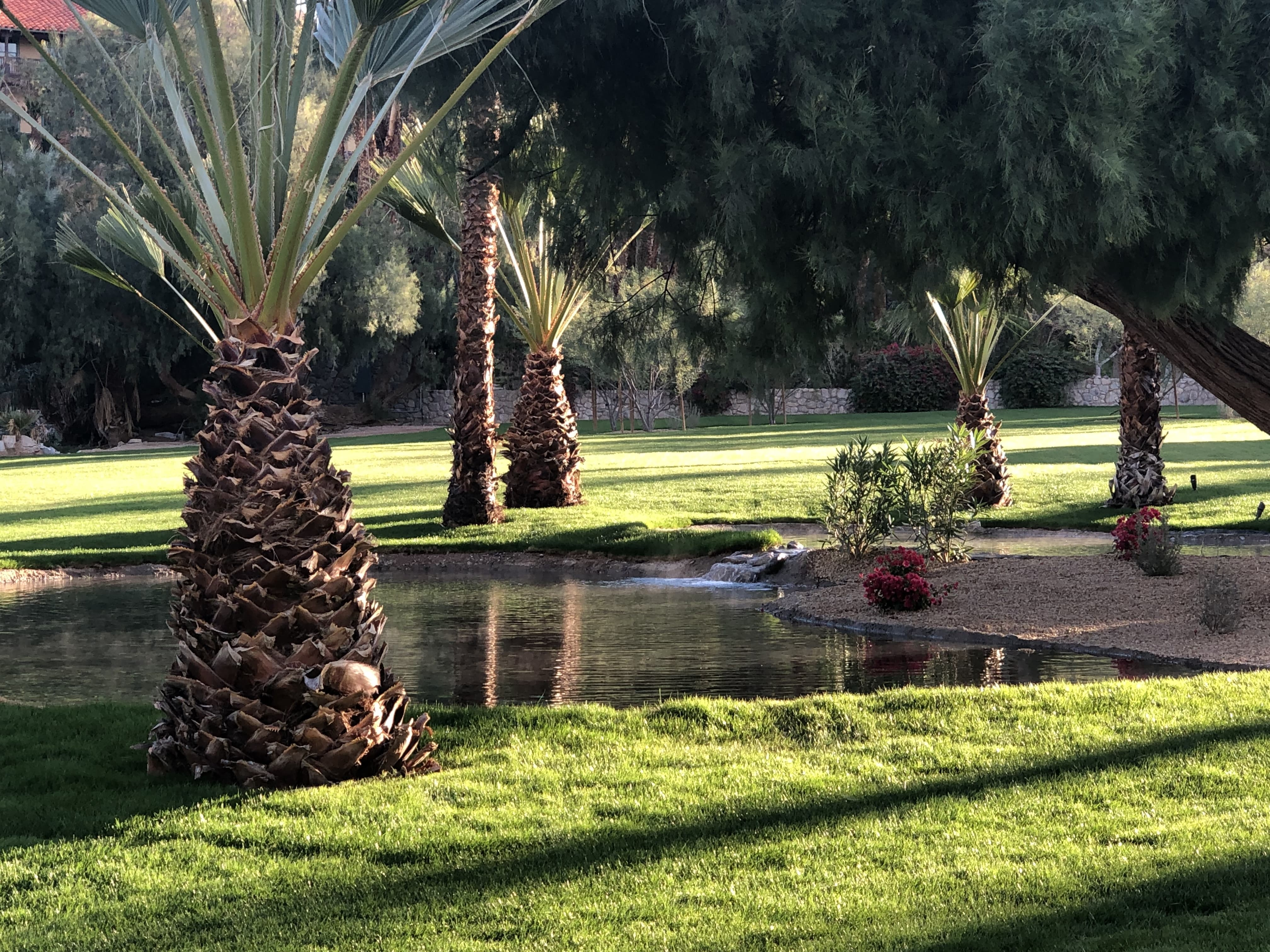 Amazingly, there was a pond surrounded with palm trees at our Casitas's backyard.