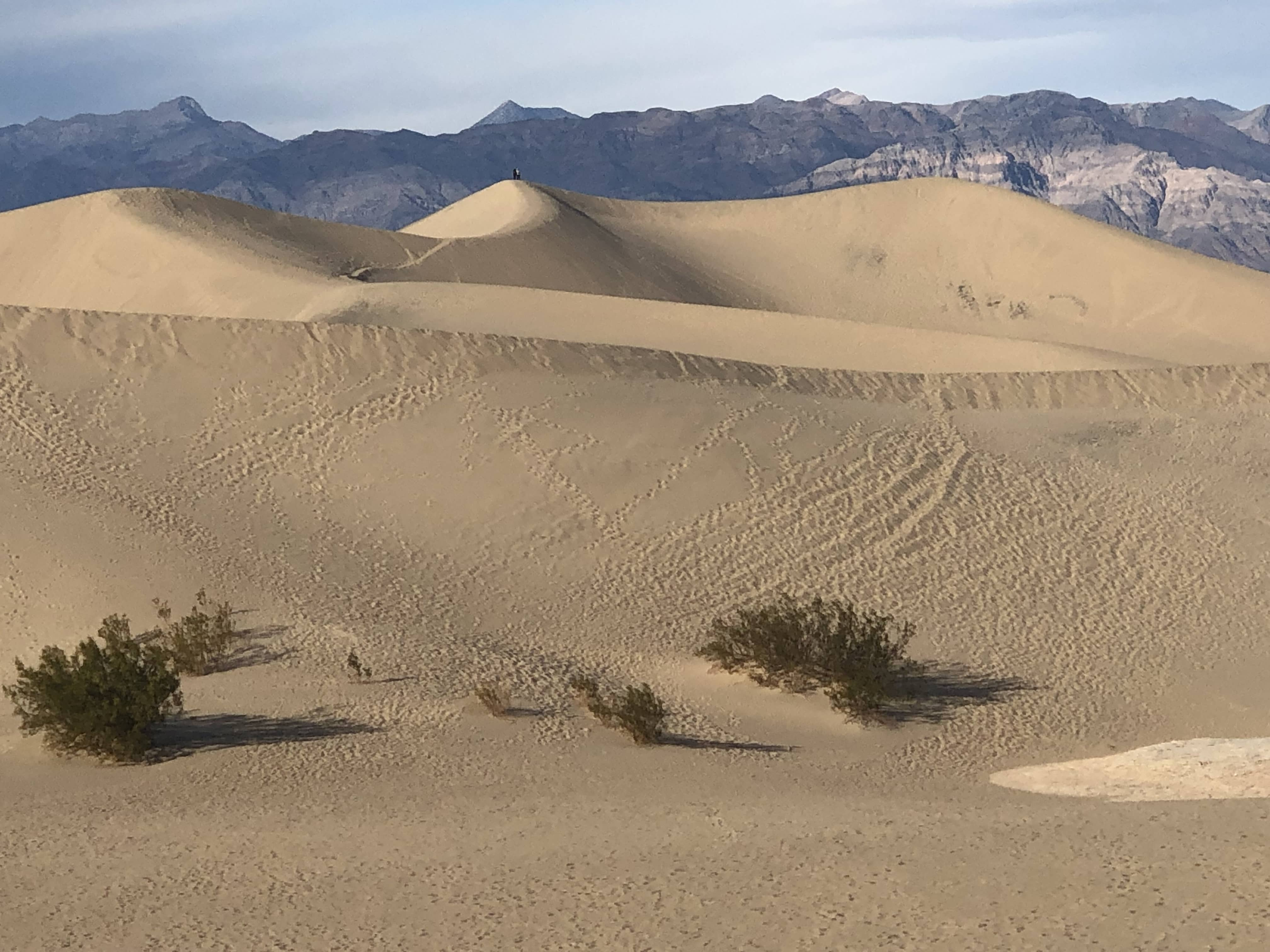 We didn't climb up to the highest dune in Mesquite Flat Sand Dunes, but some people did. Can you see them on the way to the top of the highest dune?