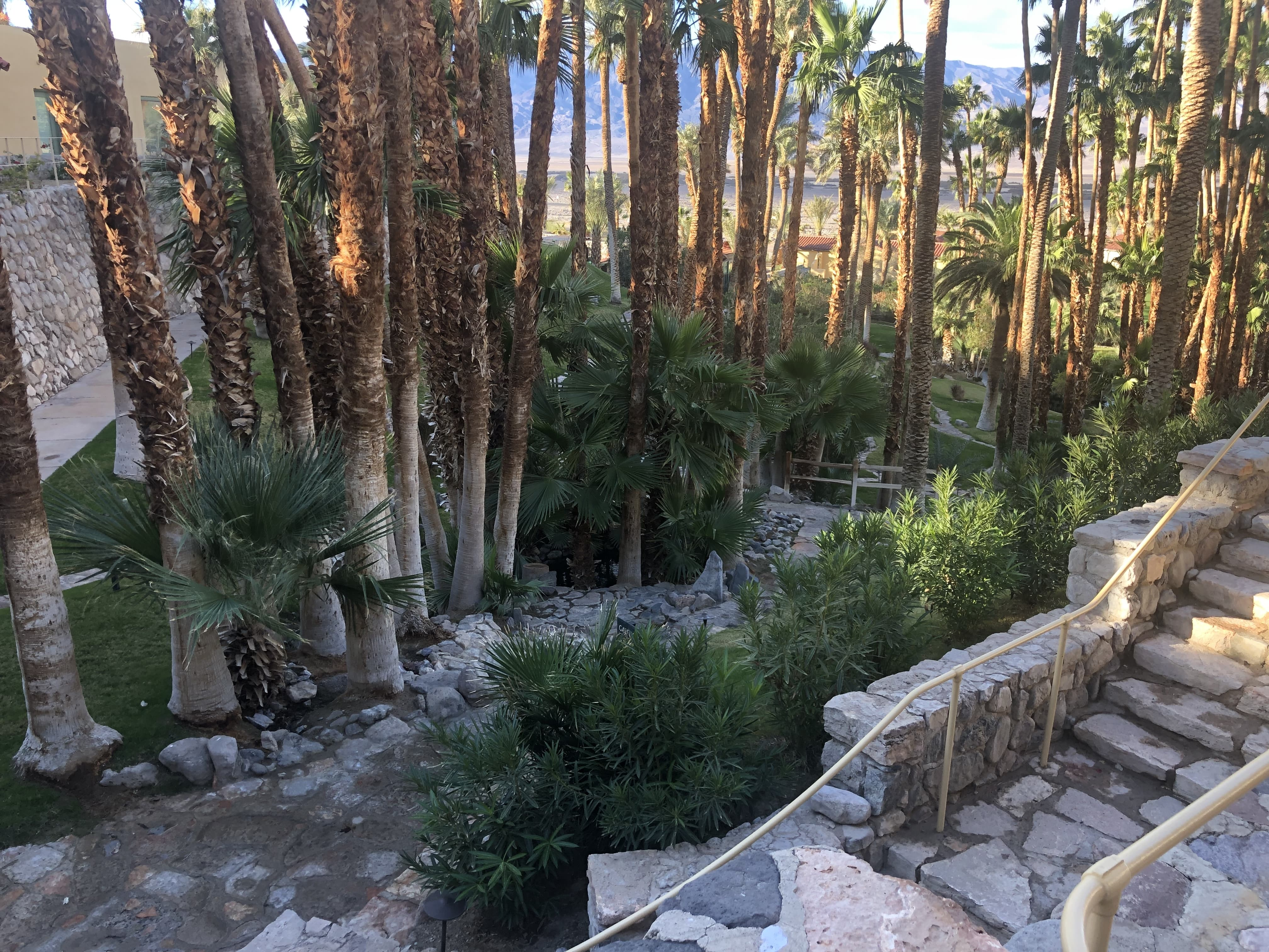 The Inn at Death Valley is covered by palm trees and spring water