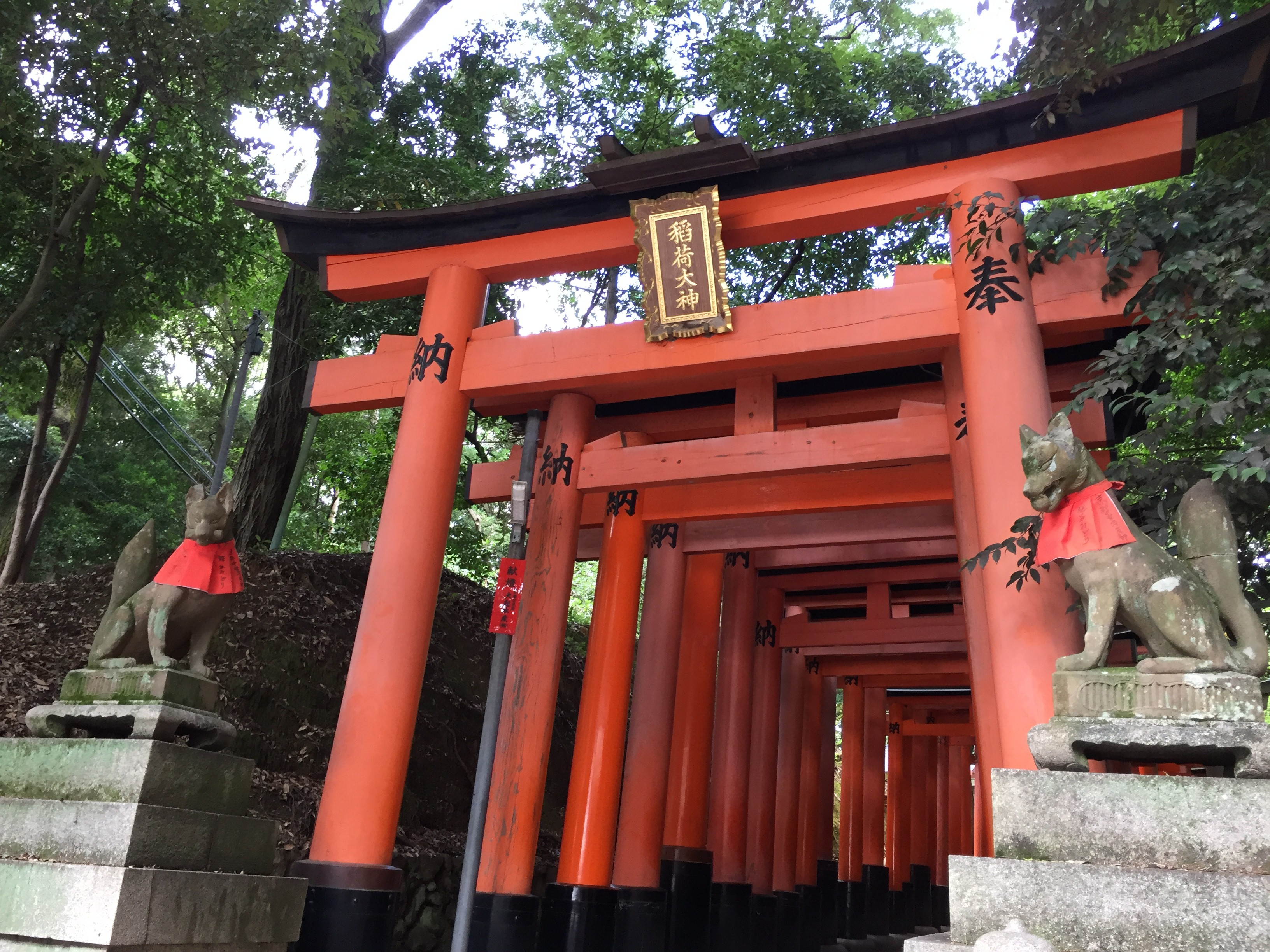 The Fukumi Inari Shrine's thousand Senbon Torii, the foxes are the messengers of the Inari God, and most people can't see them.